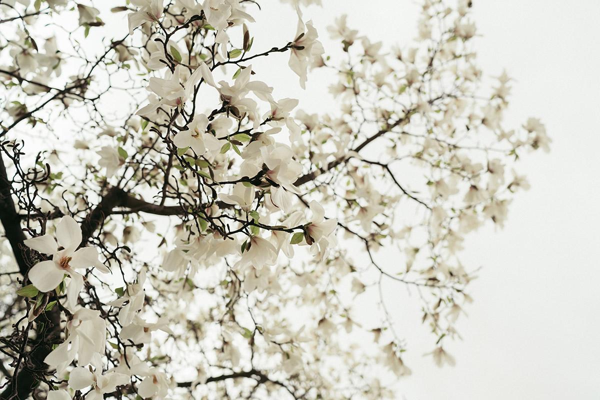 fr hlingshochzeit zur magnolienbl te ferienscheune barnimer feldmark hochzeitsfotograf www. Black Bedroom Furniture Sets. Home Design Ideas