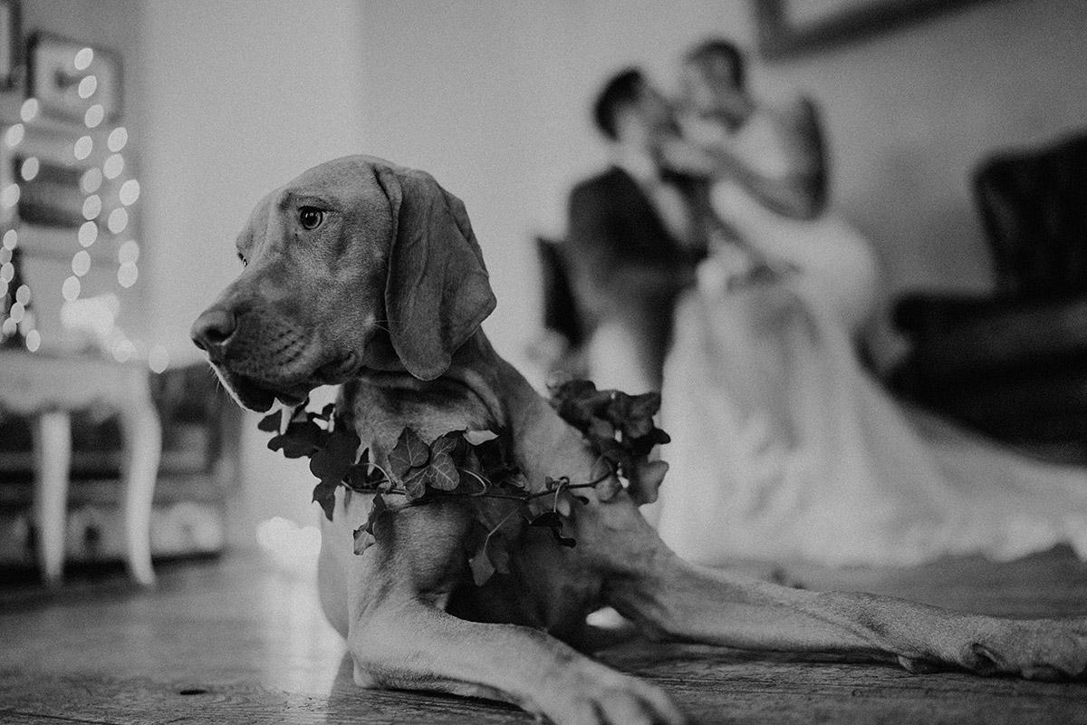 Indie Hochzeit mit Hund - The Grand Berlin Hochzeitsfotograf © www.hochzeitslicht.de