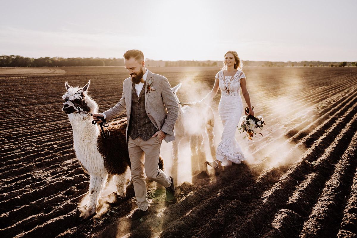 Hochzeitsfotografin aus Berlin fotografiert After Wedding Shooting mit Alpakas in Brandenburg © Hochzeitsfotograf Berlin www.hochzeitslicht.de
