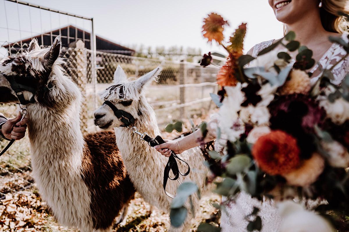 Boho Hochzeit Inspiration Alpaka - Hochzeitsfotografin aus Berlin fotografiert After Wedding Shooting mit Alpakas in Brandenburg © Hochzeitsfotograf Berlin www.hochzeitslicht.de