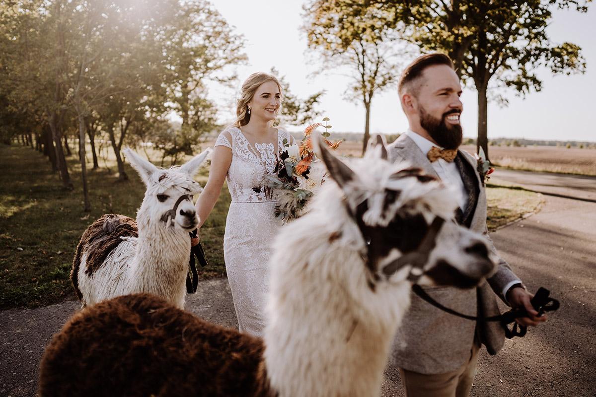 Paarfoto After Wedding Foto Vintagehochzeit - Hochzeitsfotografin aus Berlin fotografiert After Wedding Shooting mit Alpakas in Brandenburg © Hochzeitsfotograf Berlin www.hochzeitslicht.de