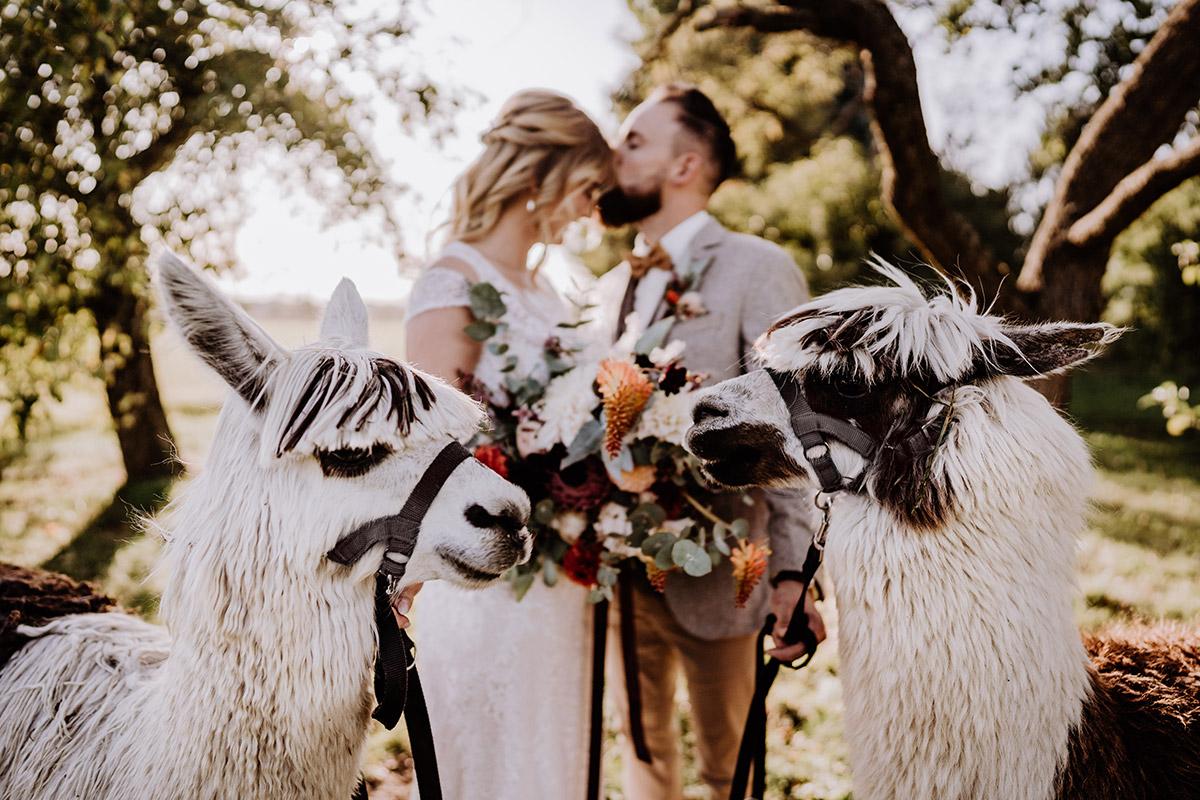 Idee modernes Paarfoto Landhochzeit Brautpaar unscharf - Hochzeitsfotografin aus Berlin fotografiert After Wedding Shooting mit Alpakas in Brandenburg © Hochzeitsfotograf Berlin www.hochzeitslicht.de