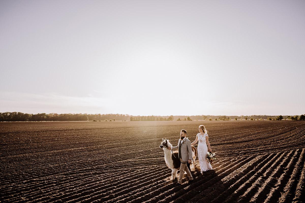 Idee Fotoshooting Hochzeit Paarfotos mit Alpaka - Hochzeitsfotografin aus Berlin fotografiert After Wedding Shooting mit Alpakas in Brandenburg © Hochzeitsfotograf Berlin www.hochzeitslicht.de