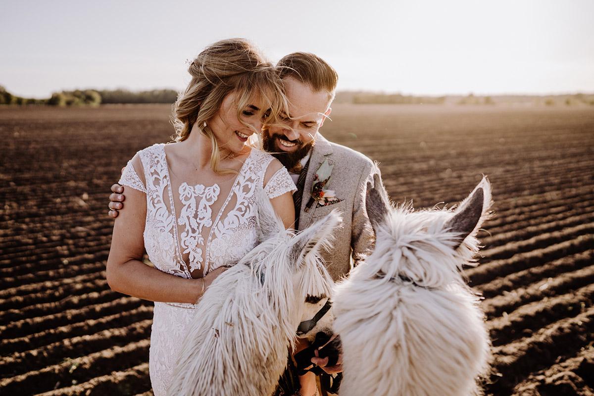 Fotoshooting Idee Brautpaar mit Alpaka - Hochzeitsfotografin aus Berlin fotografiert After Wedding Shooting mit Alpakas in Brandenburg © Hochzeitsfotograf Berlin www.hochzeitslicht.de