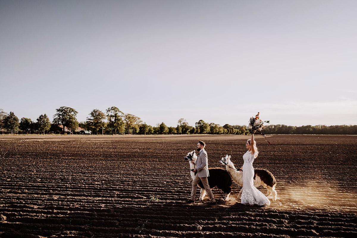 Hochzeitsfoto Landhochzeit mit Alpaka - Hochzeitsfotografin aus Berlin fotografiert After Wedding Shooting mit Alpakas in Brandenburg © Hochzeitsfotograf Berlin www.hochzeitslicht.de