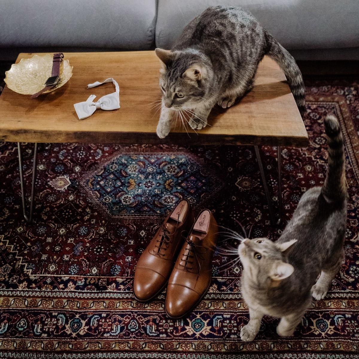 Humor Hochzeit mit Katzen, Hochzeitsfoto Idee ausgefallen, #Hochzeitsmoment beim Getting Ready vom Bräutigam mit seinen braunen Schuhen und einer hellgrauen Fliege © www.hochzeitslicht.de #hochzeitslicht #stylerealgroom