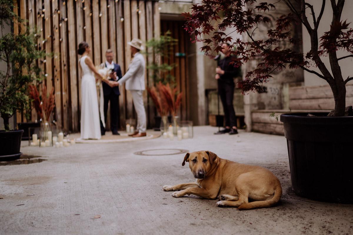 Heiraten mit Hund - schöne Hochzeitslocations in Berlin zu finden in der urbanen Elopement Hochzeitsreportage von Hochzeitsfotograf Berlin © www.hochzeitslicht.de #hochzeitslicht