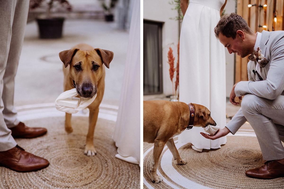 Hund Hochzeit Ringe - schöne Hochzeitslocations in Berlin zu finden in der urbanen Elopement Hochzeitsreportage von Hochzeitsfotograf Berlin © www.hochzeitslicht.de #hochzeitslicht